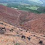 Plantation impacts