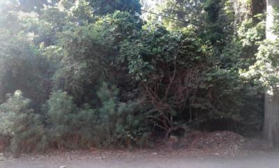 CCRI in Tanzania