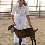 The CDGA - Colorado Dairy Goat Show at the Boulder County Fair grounds in Longmont, Colorado.