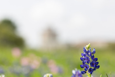2019 Campus Bluebonnets_1631