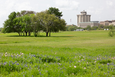 2019 Campus Bluebonnets_1651