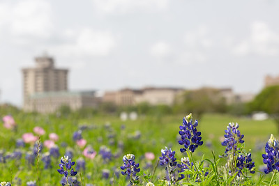 2019 Campus Bluebonnets_1636