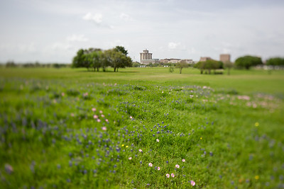 2019 Campus Bluebonnets_1674