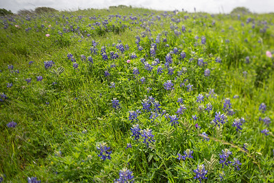 2019 Campus Bluebonnets_1677