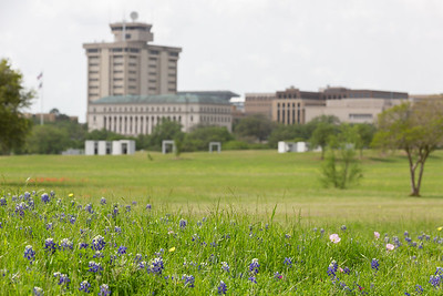 2019 Campus Bluebonnets_1645
