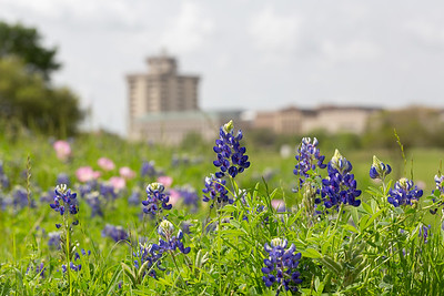 2019 Campus Bluebonnets_1641