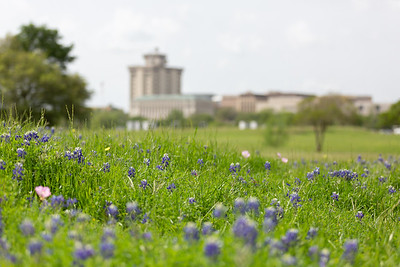 2019 Campus Bluebonnets_1646