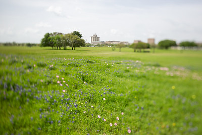 2019 Campus Bluebonnets_1675