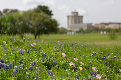 2019 Campus Bluebonnets_1657