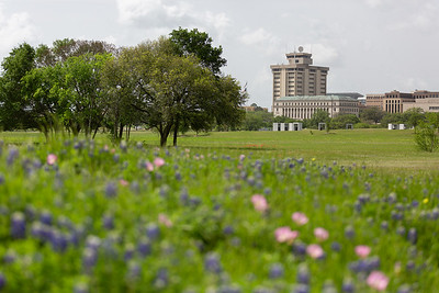 2019 Campus Bluebonnets_1658