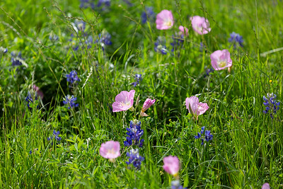 2019 Campus Bluebonnets_1649