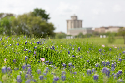 2019 Campus Bluebonnets_1647