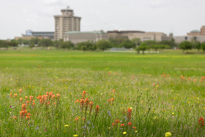 2019 Campus Bluebonnets_1686