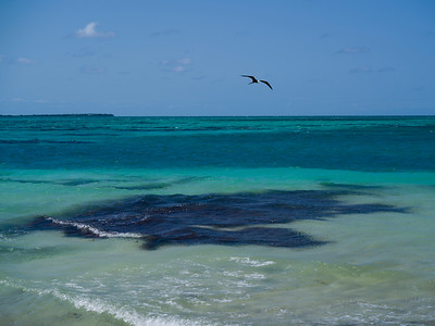 Bird flying over the ocean, Half Moon Caye, Lighthouse Reef Atoll, Belize