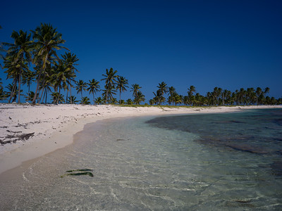 Palm trees on the beach, Half Moon Caye, Lighthouse Reef Atoll, Belize