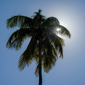 Sun shining behind palm tree, Half Moon Caye, Lighthouse Reef Atoll, Belize