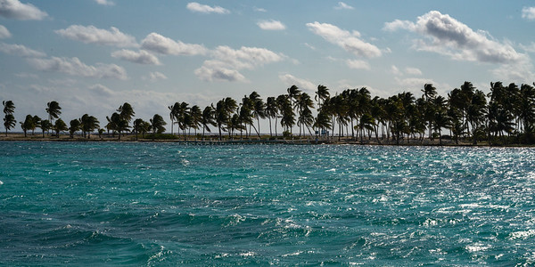 Palm trees on the beach, Belize