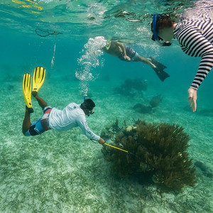 Snorkelers around coral reef, Turneffe Atoll, Belize Barrier Reef, Belize