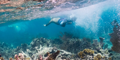 Man snorkeling, Turneffe Atoll, Belize Barrier Reef, Belize