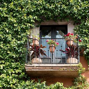 Balcony with flower planters, Zona Centro, San Miguel de Allende, Guanajuato, Mexico