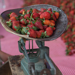 Strawberries on traditional set of scales, Arcos de San Miguel, San Miguel de Allende, Guanajuato, Mexico