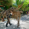 Person carrying bundle of dried palm leaves, West End Village, Roatan, Honduras