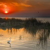 "ETC-3033  ""Egret at Sunset"""