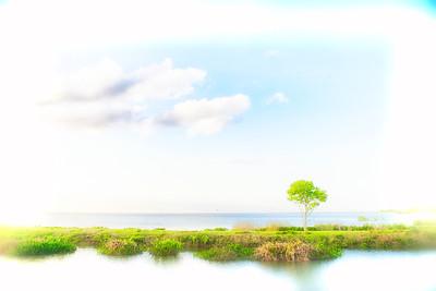 "ETC-3045  ""Lone Tree on a Dreamy Day"""