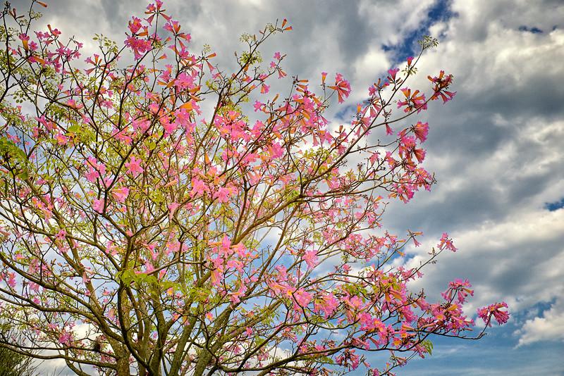 """ETC-3079  """"Pink Flowers Against Sky"""""""