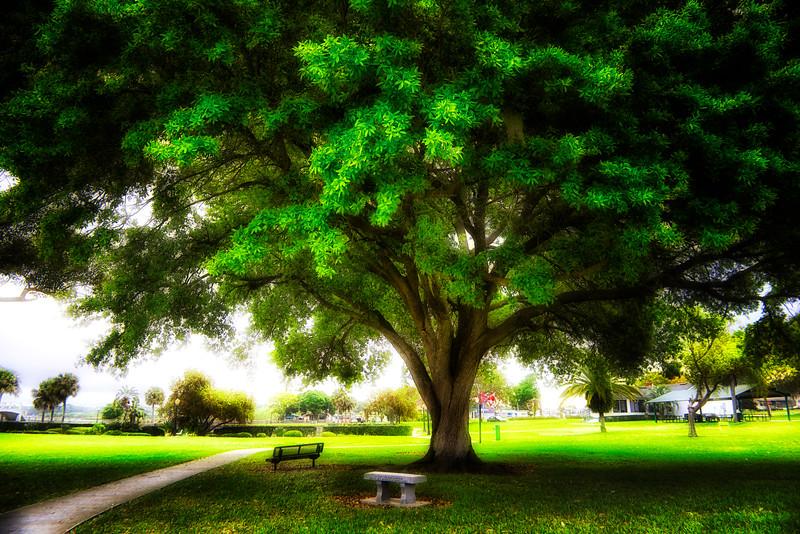 "ETC-3065  ""Giant Tree over Benches"""