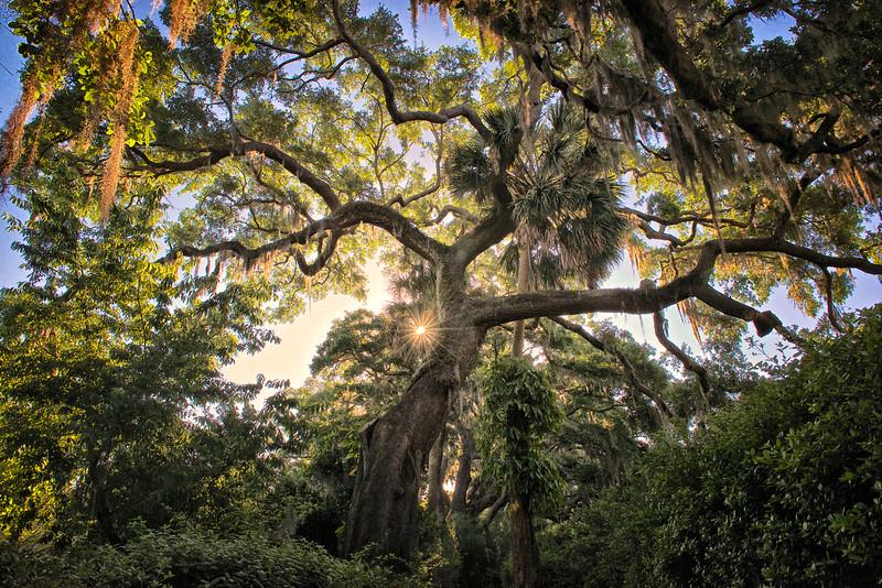 """ETC-3114  """"Sunburst Through Picturesque Tree"""""""