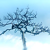 "ETC-3158  ""Tree in the Clouds"""