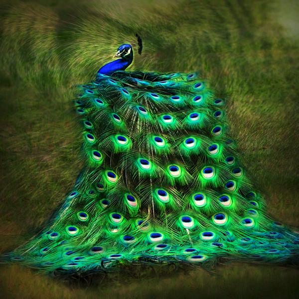 "ETC-3355  ""Peacock Swirl (dark)"""