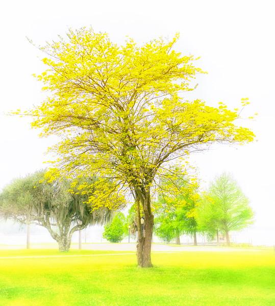 """EC-3069  """"Yellow Dance"""""""