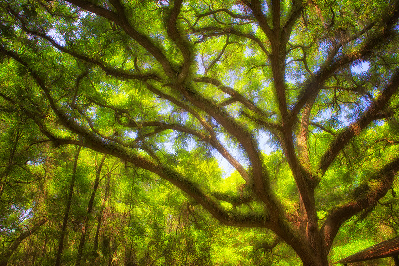 "ETC-3107  ""Sunlight Through Tree Branches"""