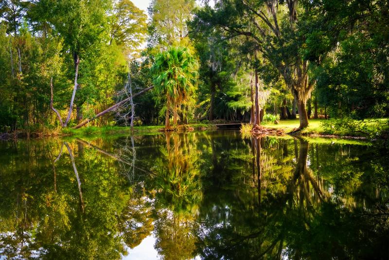 """ETC-3446-WPP1686  """"Tree Reflections"""""""