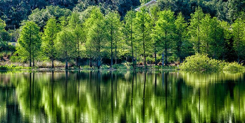 "ETC-3116  ""Green Reflections"""