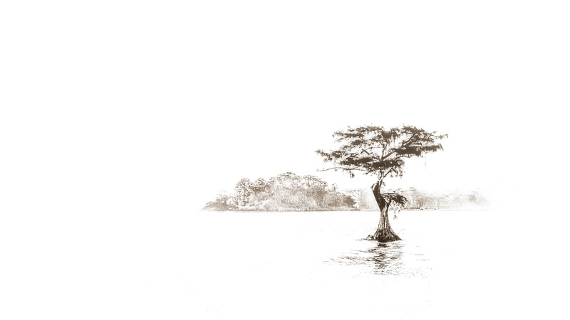 """ETC-3500-WPP1710 """"Lonely Cypress 11 """" Med  File_9988-4"""
