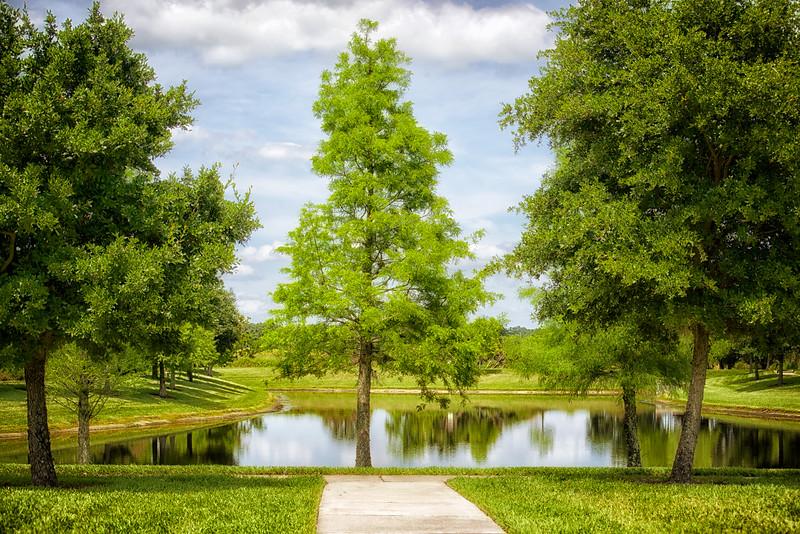 """ETC-3142  """"Trees and Lake"""""""
