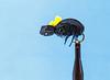Foam Beetle (High Viz)