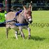 Donkey derby 044