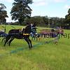 Donkey derby 012