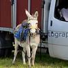 Donkey derby 005