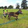 Donkey derby 023