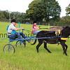 Donkey derby 016