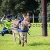 Donkey derby 042