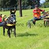 Donkey derby 048