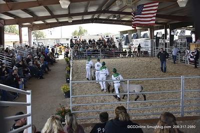 CFR Livestock Show 2018 Sheep