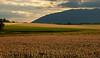Clover Field 04_DSC2809 (2005-07-10)