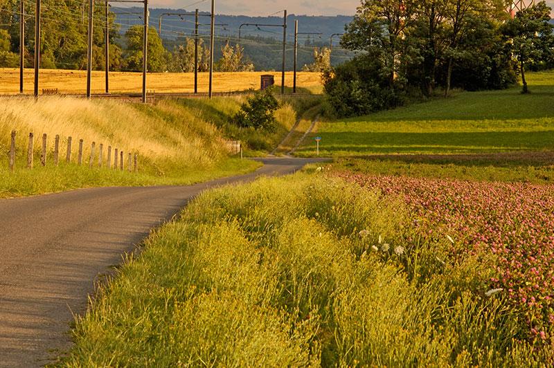 Clover Field 05_DSC2831 (2005-07-10)